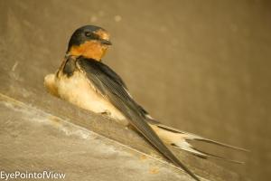 20130713-birds_nest0766