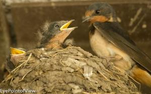 20130713-birds_nest0814